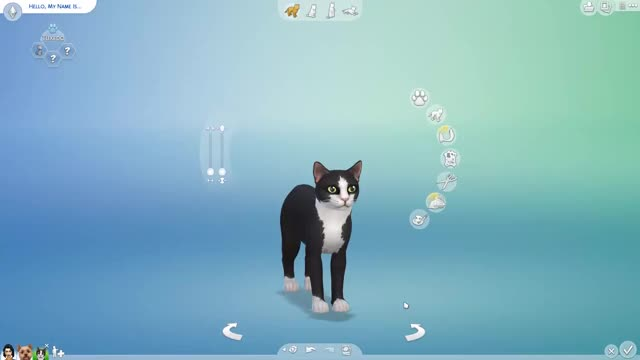 Watch ALL THE DOGS AND CATS IN SIMS 4 CATS AND DOGS GIF on Gfycat. Discover more Gaming, all, and, breed, breeds, bria leigh, cats, dog, dogs, expansion, of, sims, sims4catsanddogs, the GIFs on Gfycat
