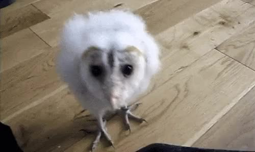 Watch and share Owl GIFs on Gfycat