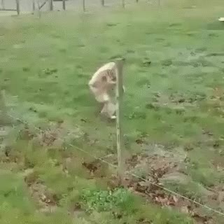 Watch and share Funny Animal Gifs, Funny Animated Pictures, Funny Animals GIFs on Gfycat