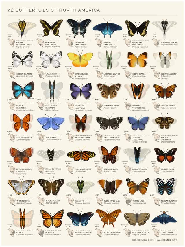 Watch and share Butterfly GIFs and Biology GIFs by Tabletop Whale on Gfycat