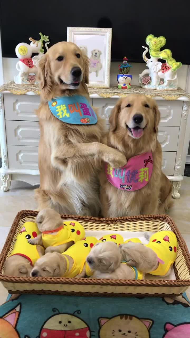 dog, proud parents GIFs