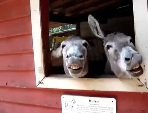Watch and share Donkey GIFs on Gfycat