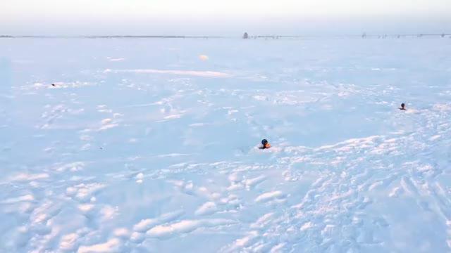 Watch and share Cheeky Arctic Fox GIFs and Ильдар Биктимиров GIFs on Gfycat