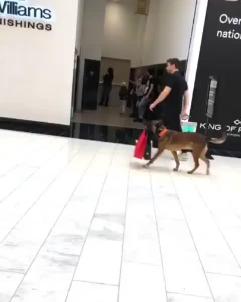 Watch Carrier bag doggo GIF by GB (@gallowboob) on Gfycat. Discover more animals, aww, cute, dog GIFs on Gfycat