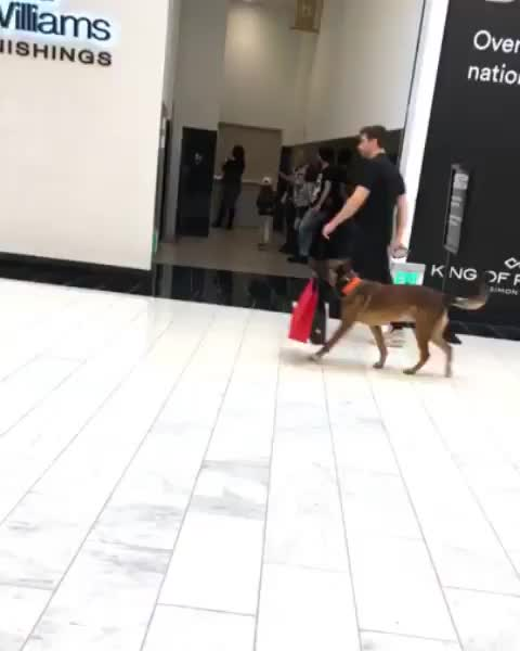 animals, aww, cute, dog, Carrier bag doggo GIFs