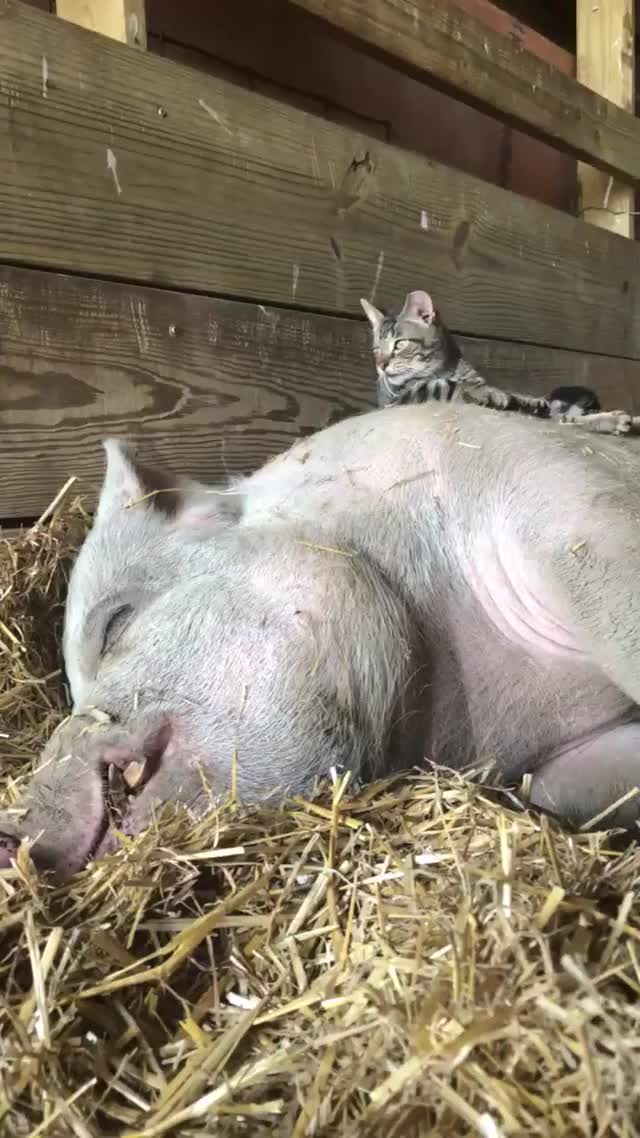 Watch and share Barn Sanctuary GIFs on Gfycat