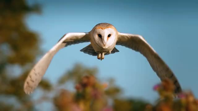 Watch Barn Owl midflight GIF by doom85 (@doom85) on Gfycat. Discover more nature, owl, slow motion GIFs on Gfycat