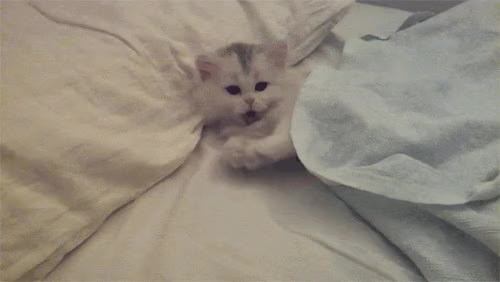 Watch this good night GIF by GIF Master Blaster (@xitenik) on Gfycat. Discover more good night, goodnight GIFs on Gfycat