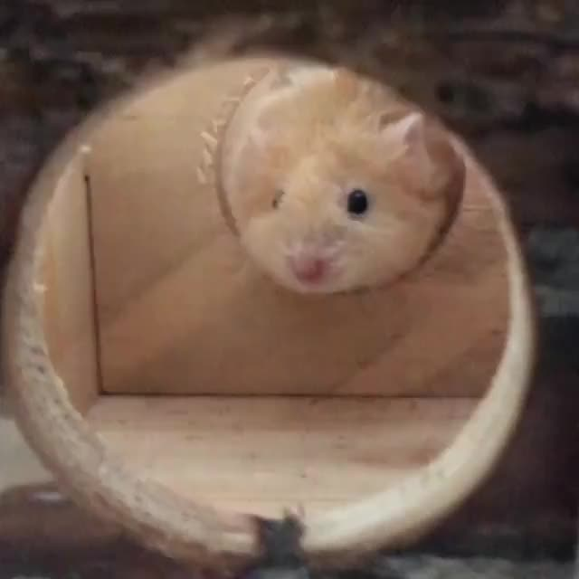 Watch /r/MouseGifs - from charlieandelliott GIF by @cakejerry on Gfycat. Discover more aww, cute, mice, mousegifs GIFs on Gfycat