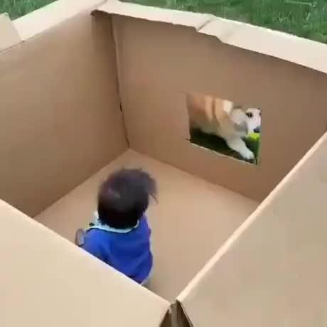 Lets play fetch Tiny human - gif