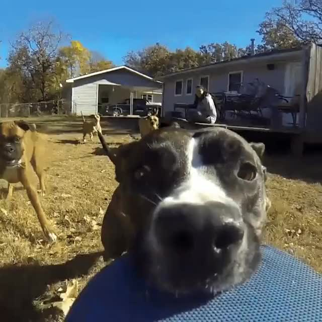Watch and share Doggo Runs Away With A GoPro GIFs on Gfycat