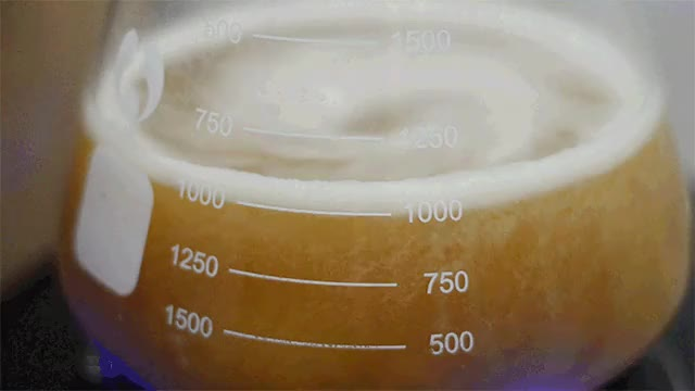 Watch Yeast Starter GIF on Gfycat. Discover more related GIFs on Gfycat