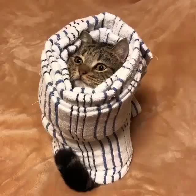 Kitty burrito GIFs
