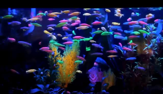 Watch and share Fincasters Episode 8 GloFish GIFs on Gfycat
