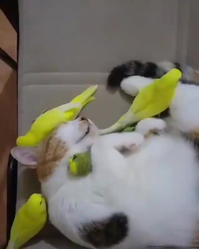 Watch and share Birbs Love Their Feline Friend GIFs by tothetenthpower on Gfycat