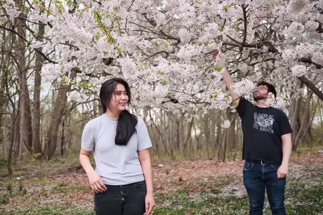 Watch and share Philly Cherry Blossoms Stable GIFs by timtiebout on Gfycat