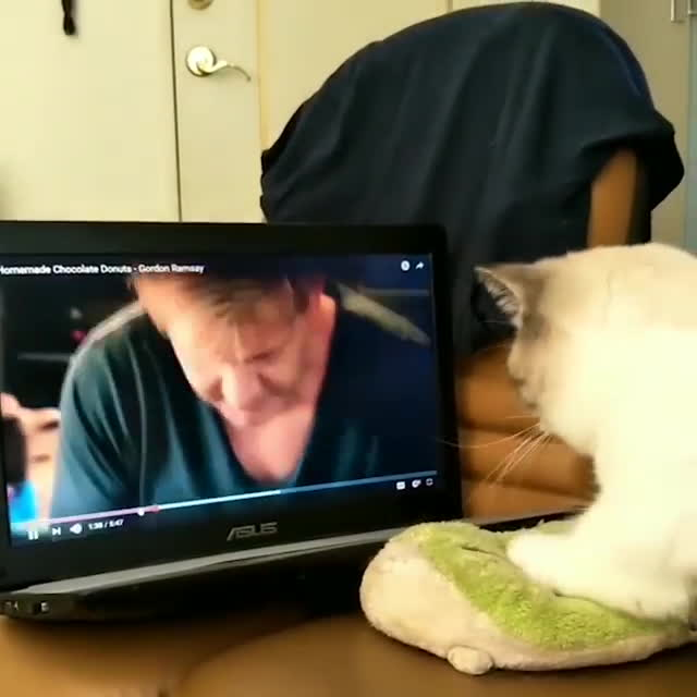 thisismylifenow, This cat loves cooking with Gordon Ramsay 😂🐶 GIFs
