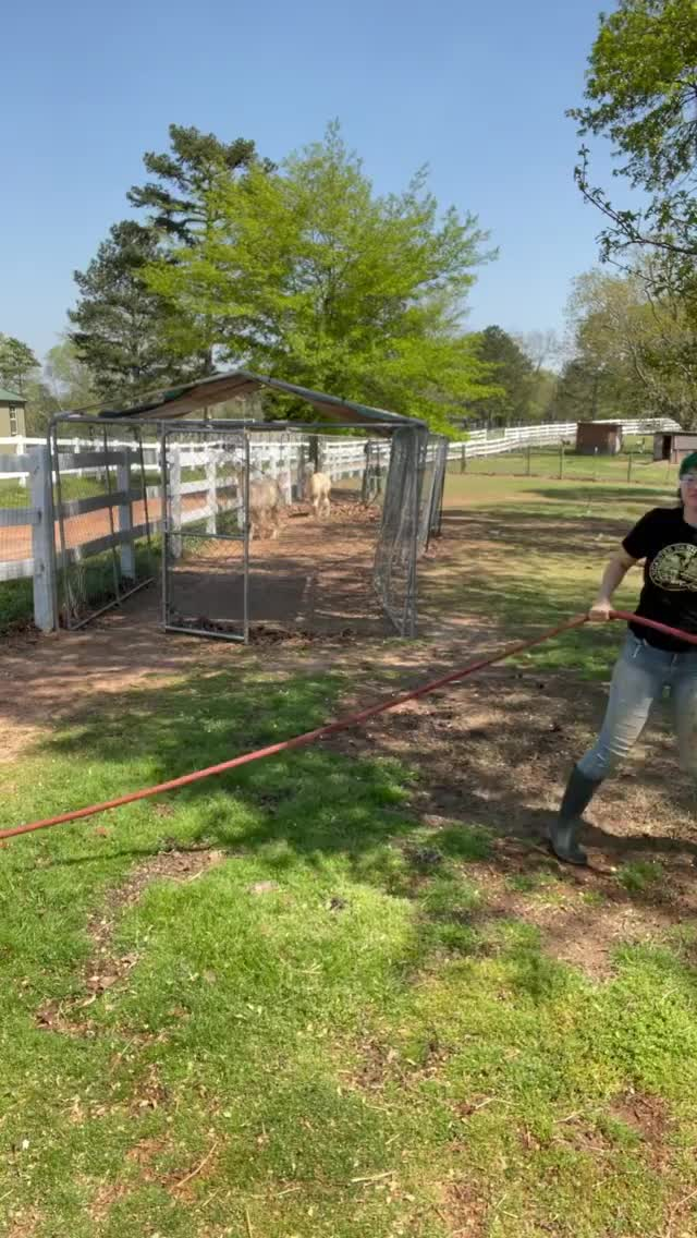 Watch and share Full Circle Farm Sanctuary GIFs by b12ftw on Gfycat