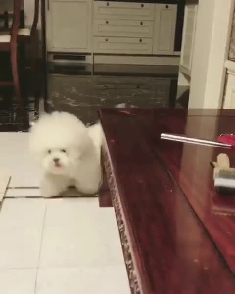 StoppedWorking, Video by cutepetclub GIFs