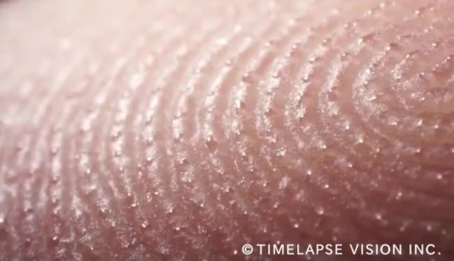 Watch and share Fingerprints And Sweat Glands - 指紋と汗腺 - GIFs on Gfycat