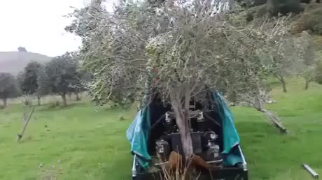 Watch and share Olive Harvester GIFs on Gfycat