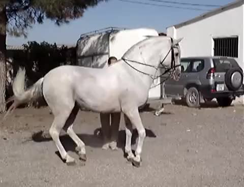 Watch horse GIF on Gfycat. Discover more horse GIFs on Gfycat