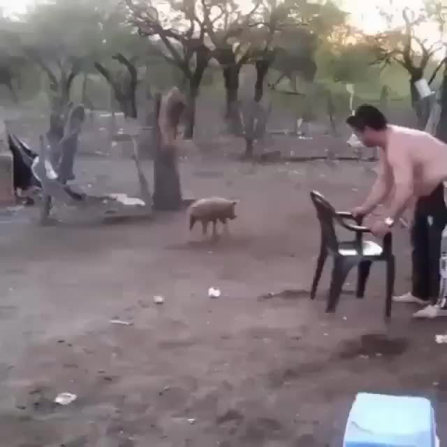 classic4chan, holdmyfries, HMF while I get this pig GIFs
