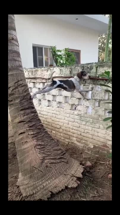 Watch and share Dog Climb GIFs by zpowdev on Gfycat