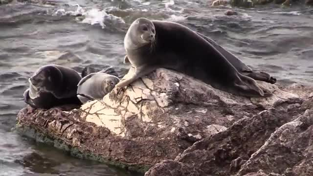 Watch and share Baikal Seals GIFs on Gfycat