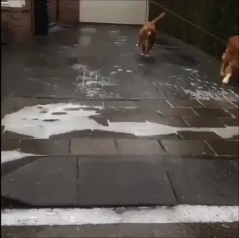 dog, funny, sliding, squirrel,