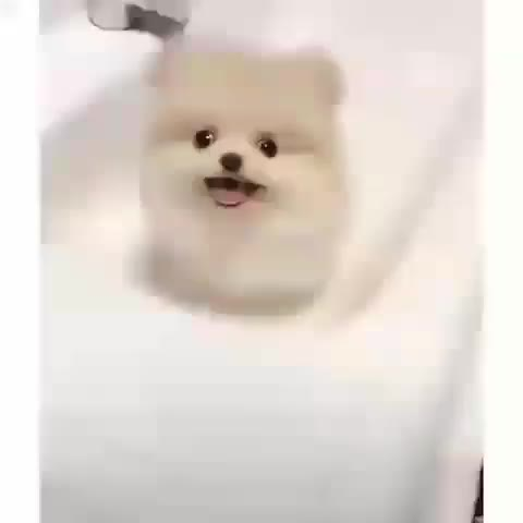 Watch and share Animalovers GIFs and Cutepuppies GIFs by notmyproblem on Gfycat