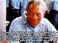 Watch and share Morgan Freeman GIFs on Gfycat
