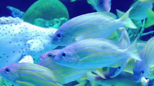 Watch and share Aquarium Fish GIFs by Moodica on Gfycat