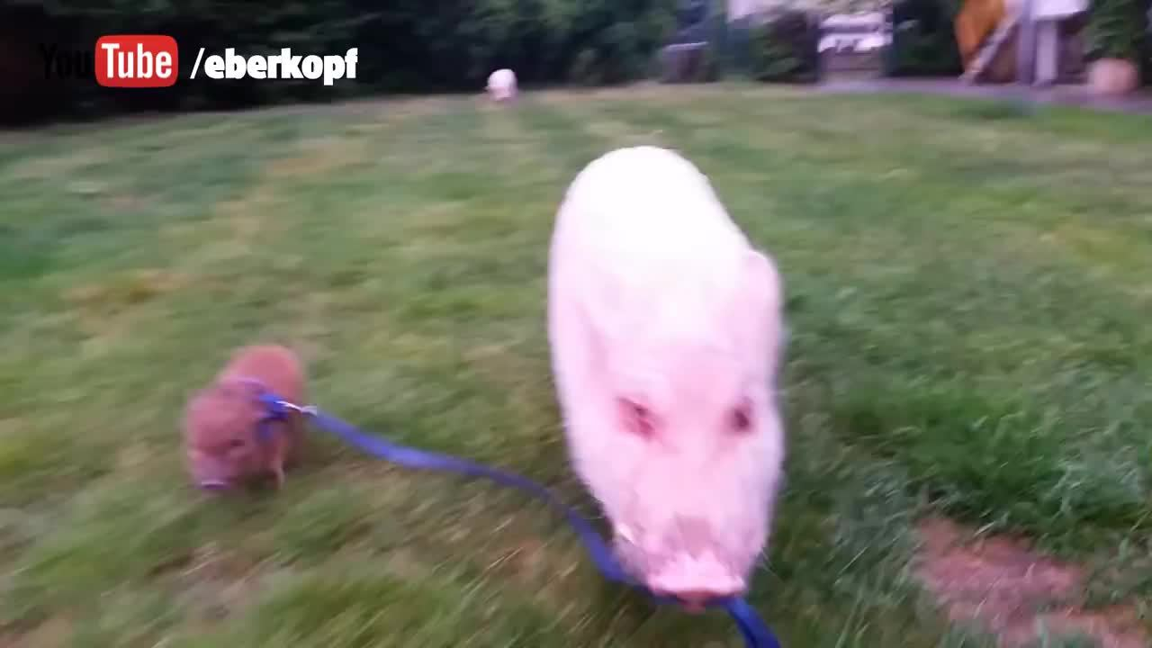 AnimalsBeingBros, animalsbeingbros,  GIFs