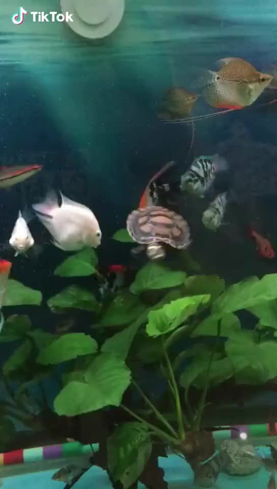 Watch Turtle's rotation GIF by @leathernegotiation on Gfycat. Discover more related GIFs on Gfycat