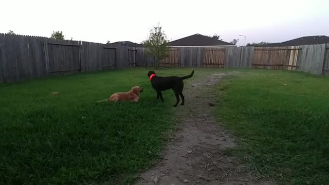 Watch Zoomies GIF on Gfycat. Discover more No Fun, People & Blogs GIFs on Gfycat