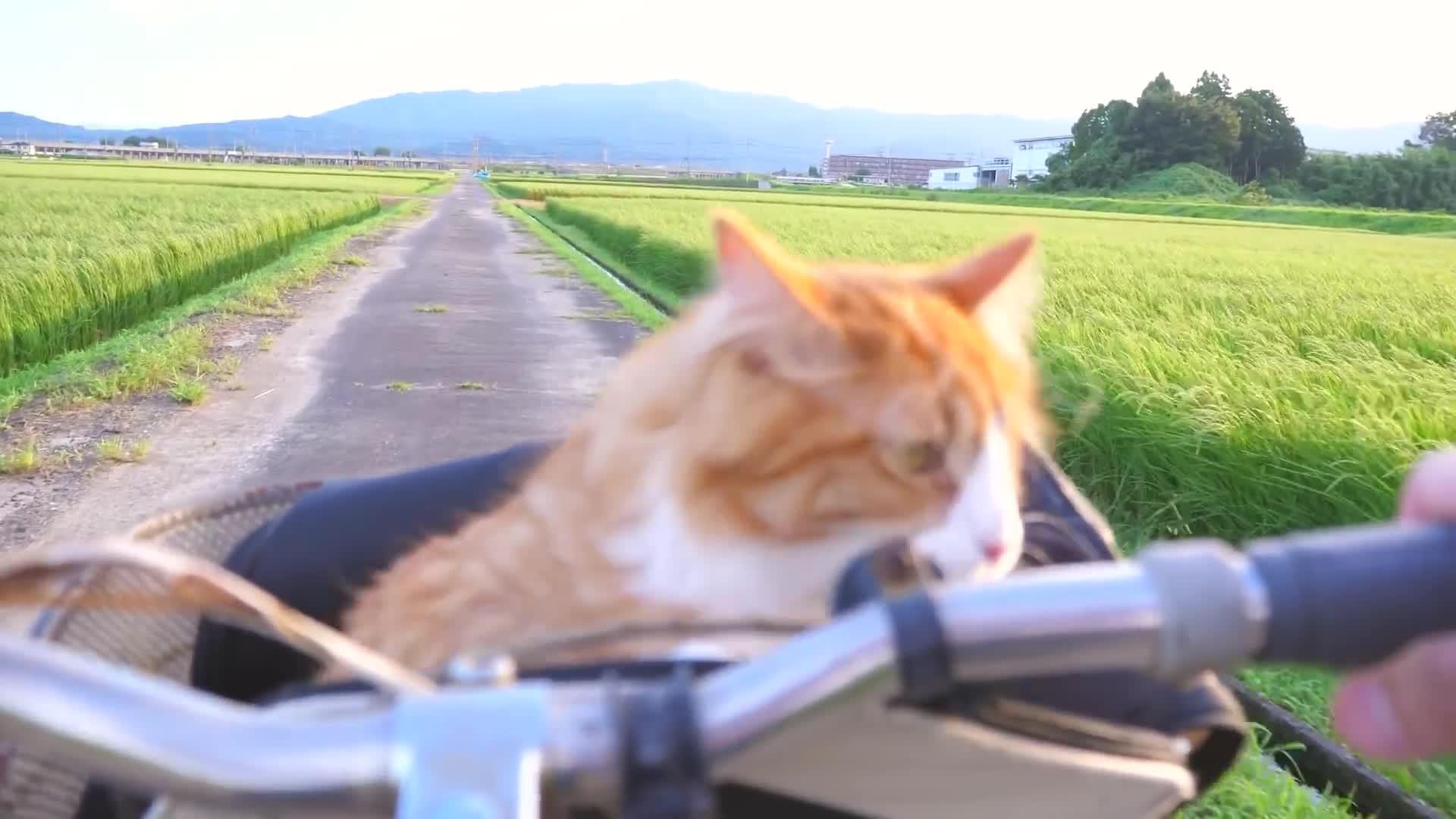 cat, cute, bike ride GIFs