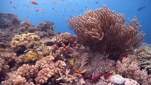 Watch and share Reef GIFs on Gfycat
