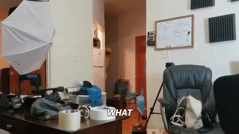 Watch and share Hila GIFs on Gfycat