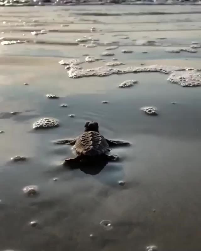 Watch and share Nature GIFs by MyNameGifOreilly on Gfycat