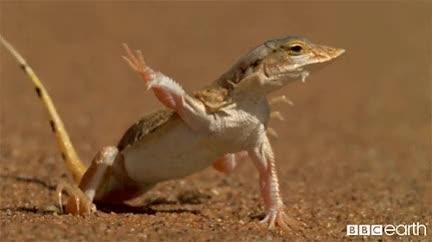 This frog is dancing.....? twice sana produce48 no momoland kpop jihyo hi good luck funny fml dumb dubu dance cute cosmicgirls celebs bbc arin animals GIF