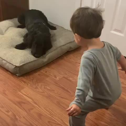 kid, dog, fail, Mess with the bull GIFs