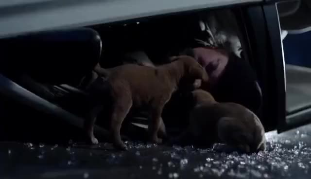 Watch and share Dogs GIFs on Gfycat