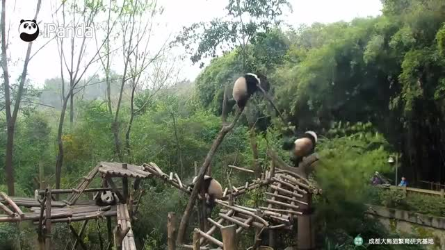 Watch and share Chengdu GIFs and Sichuan GIFs on Gfycat