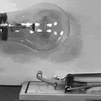 Watch and share Light Bulb And A Mouse Trap GIFs on Gfycat