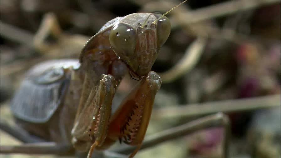 nature, Praying Mantis GIFs