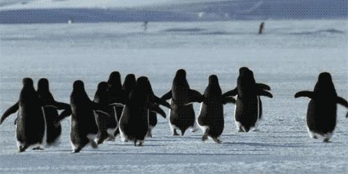 penguins group GIFs