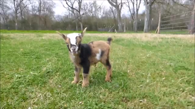 Watch and share Cute GIFs by KNS Farm on Gfycat