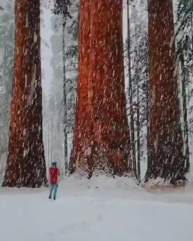 Watch and share Snowfall GIFs and Snow GIFs by esberat on Gfycat