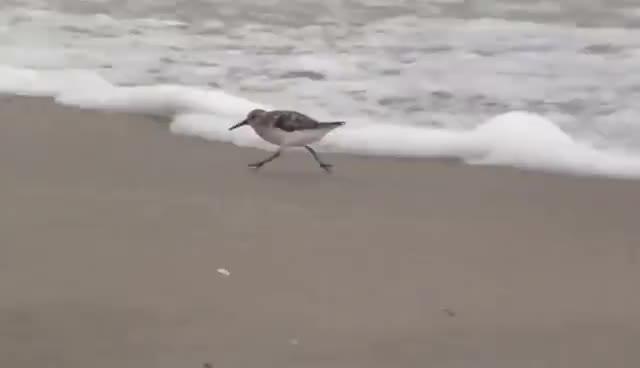 Hilarious Bird! GIFs